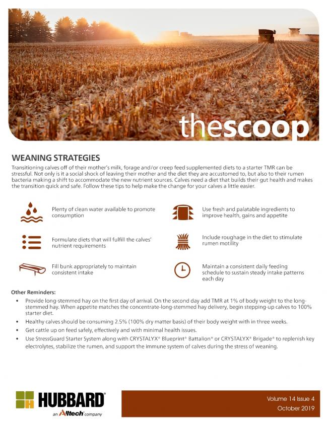 The Scoop - October 2019
